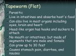 tapeworm flat
