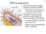 dna in prokaryotes