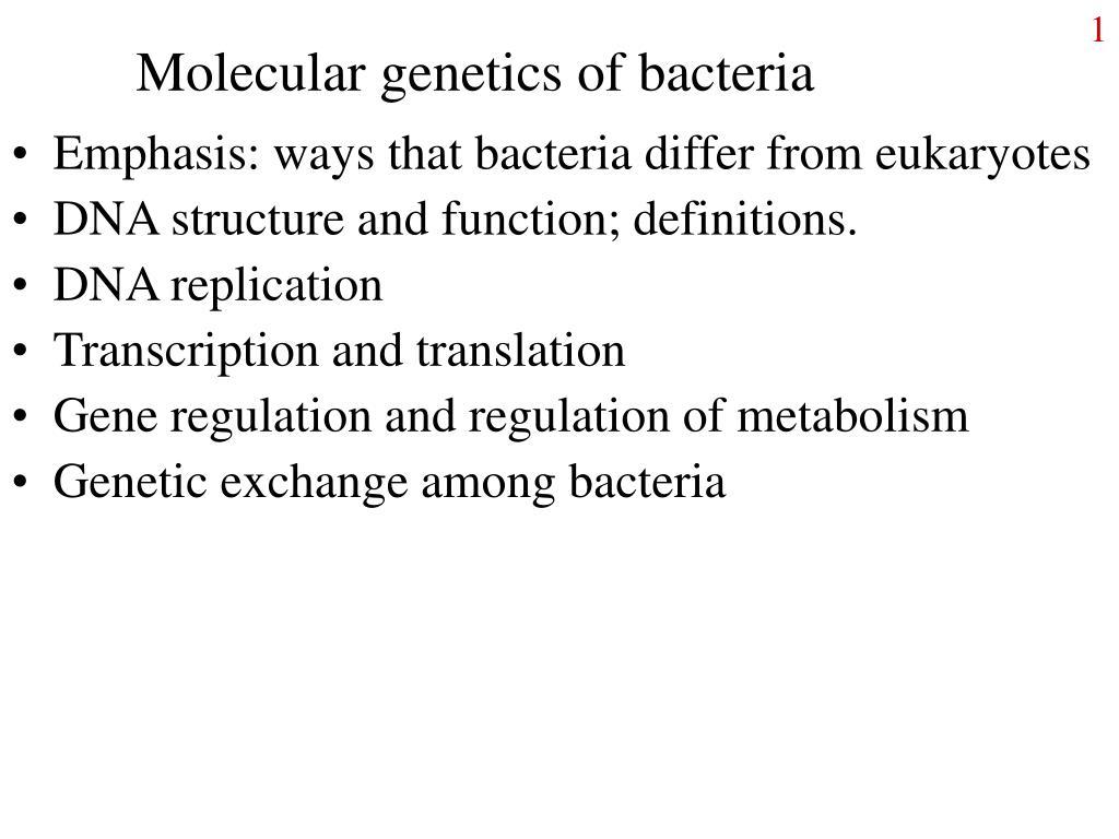 molecular genetics of bacteria l.
