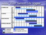 cedar river salmon life stages