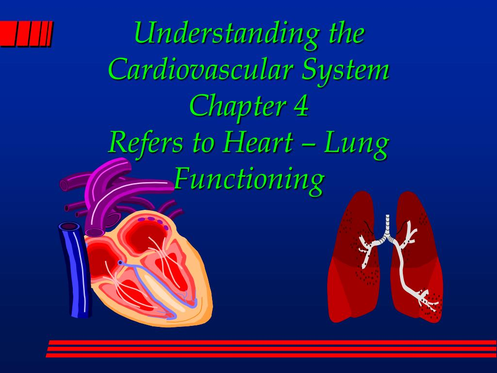 understanding the cardiovascular system chapter 4 refers to heart lung functioning l.