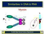 similarities in dna rna12