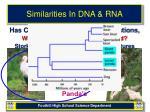 similarities in dna rna13