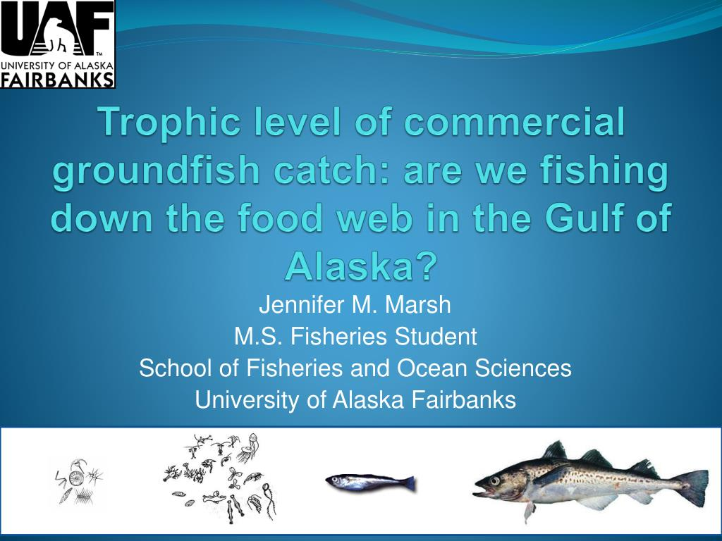 trophic level of commercial groundfish catch are we fishing down the food web in the gulf of alaska l.