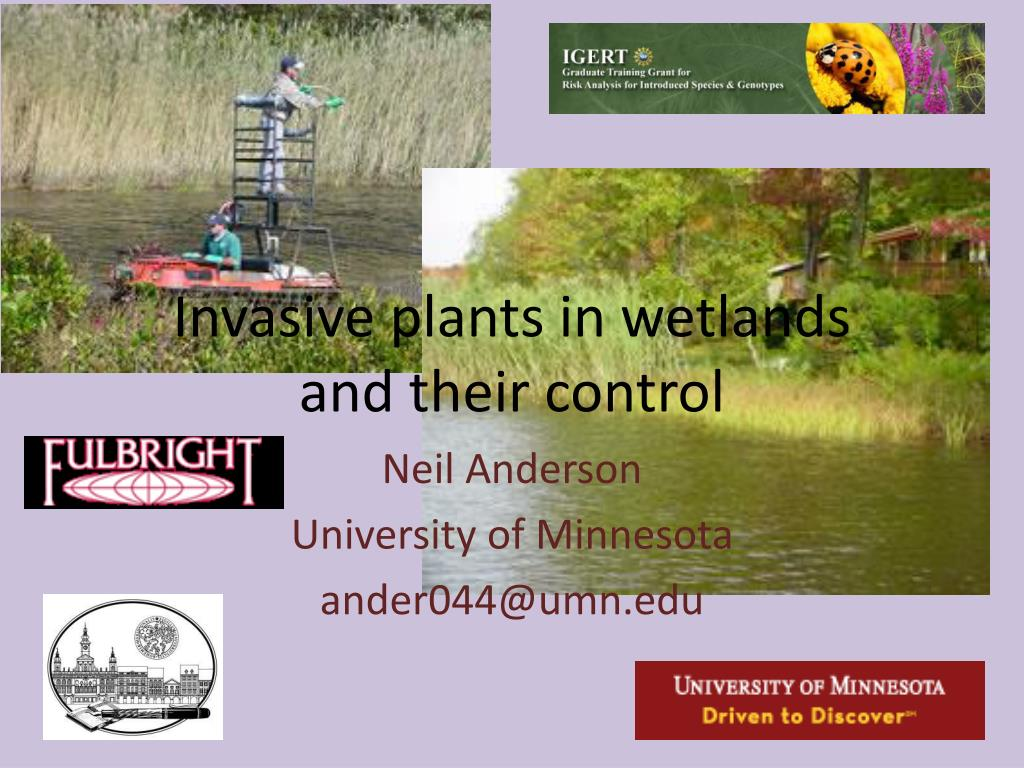 invasive plants in wetlands and their control l.