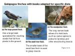 gal pagos finches with beaks adapted for specific diets