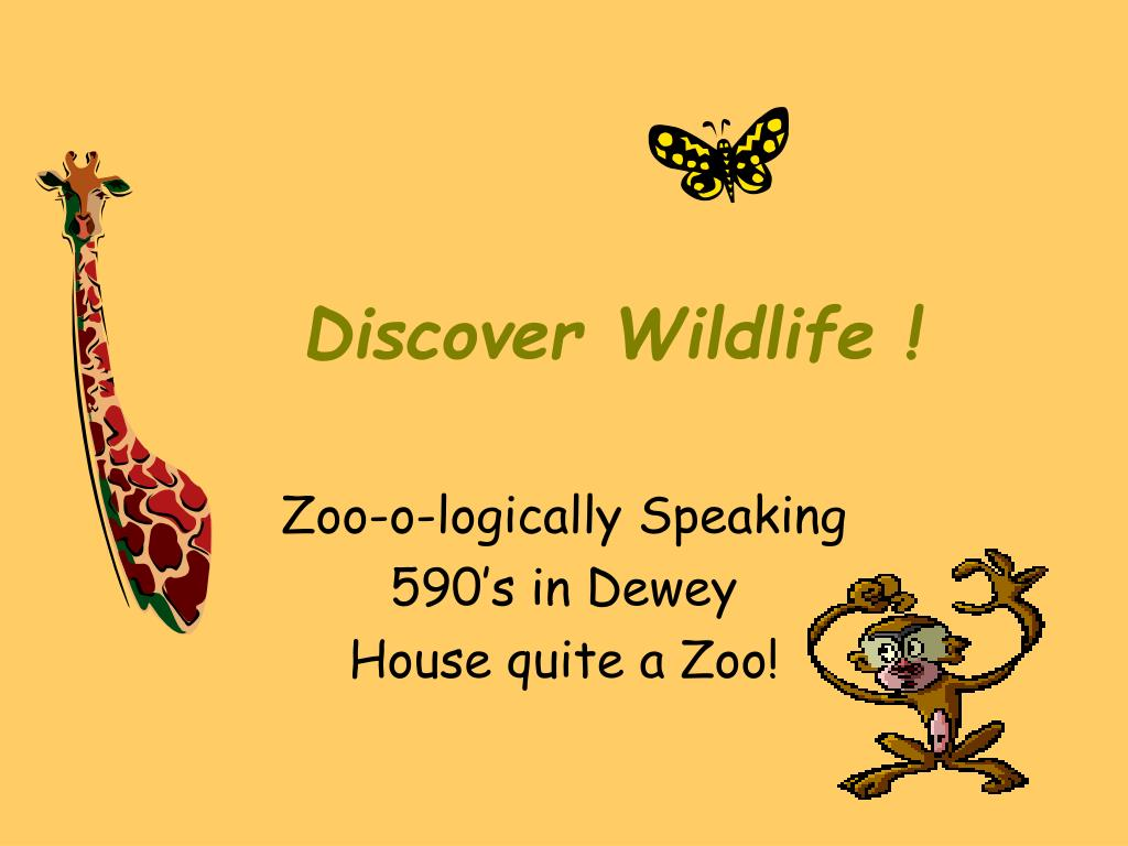 discover wildlife l.