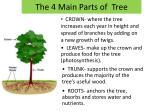 the 4 main parts of tree