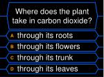 where does the plant take in carbon dioxide