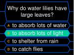 why do water lilies have large leaves40
