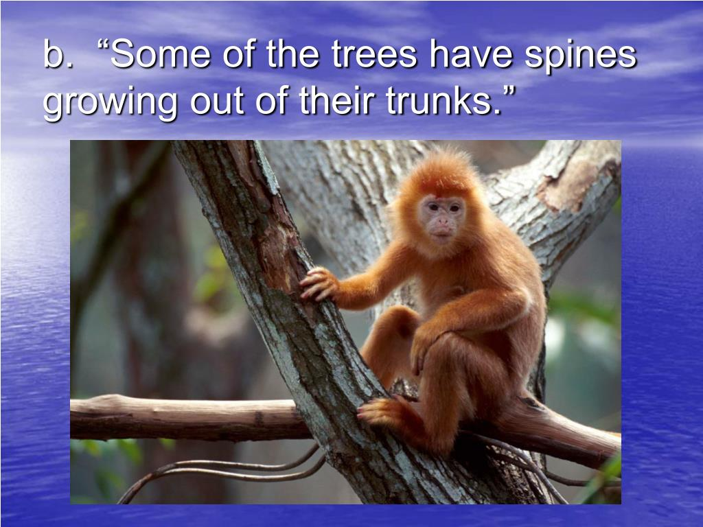 "b.  ""Some of the trees have spines growing out of their trunks."""