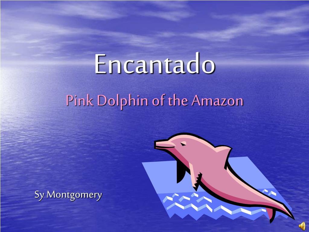 encantado pink dolphin of the amazon l.