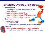 circulatory system homeostasis