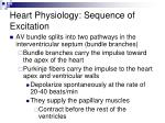 heart physiology sequence of excitation44