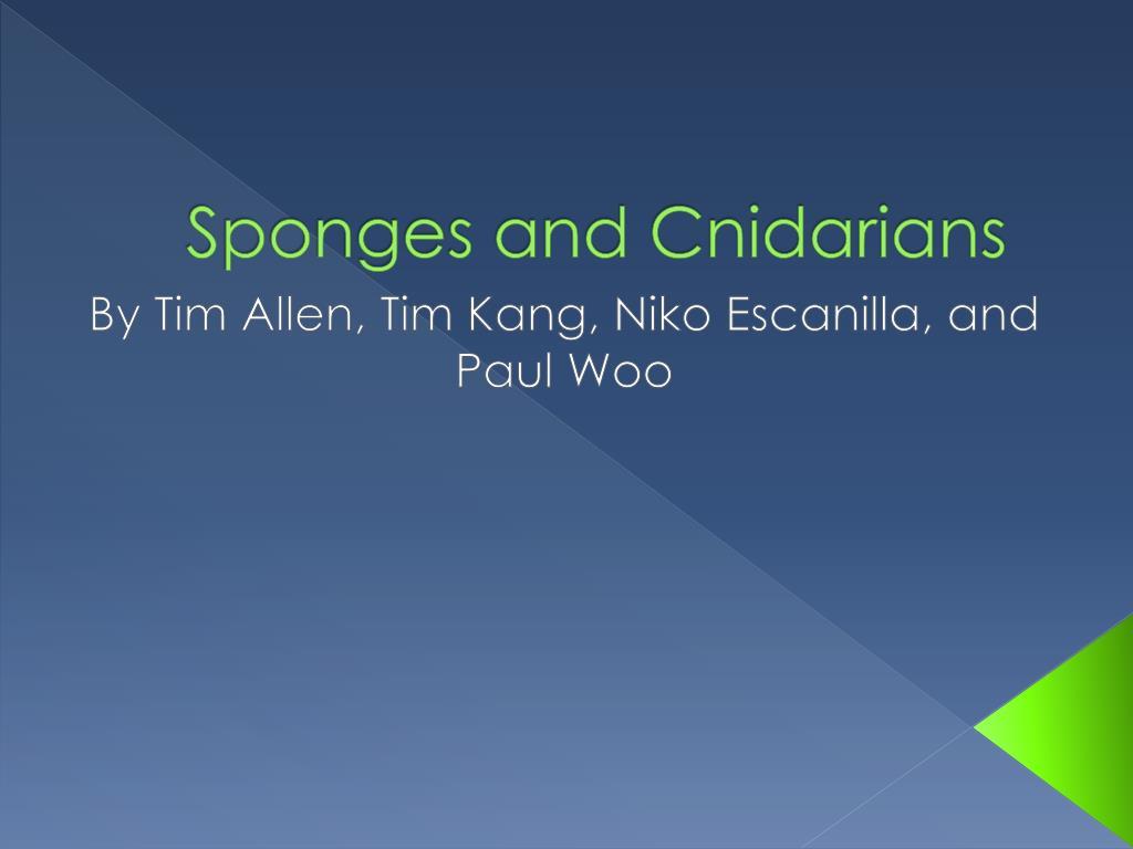 sponges and cnidarians l.