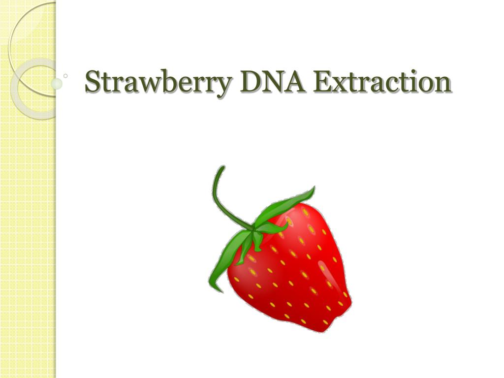 strawberry dna extraction l.