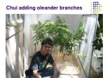 chui adding oleander branches