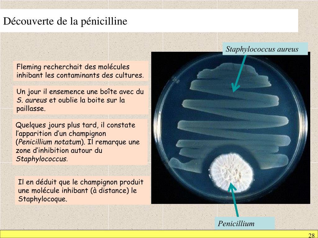 Découverte de la pénicilline