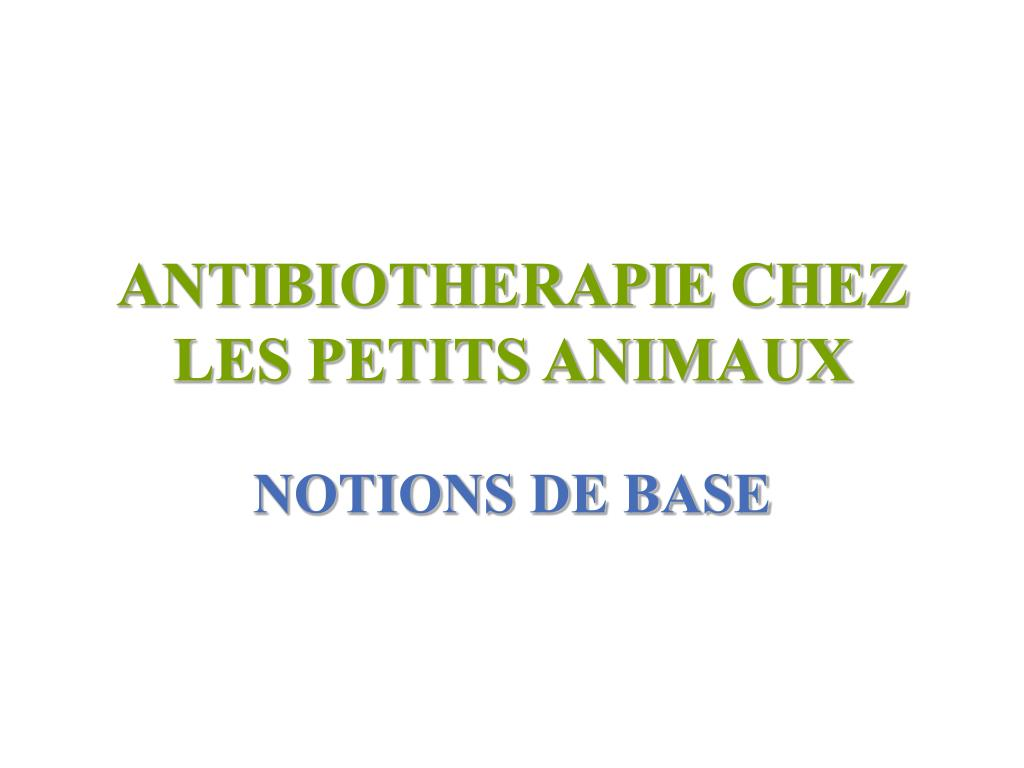 antibiotherapie chez les petits animaux l.