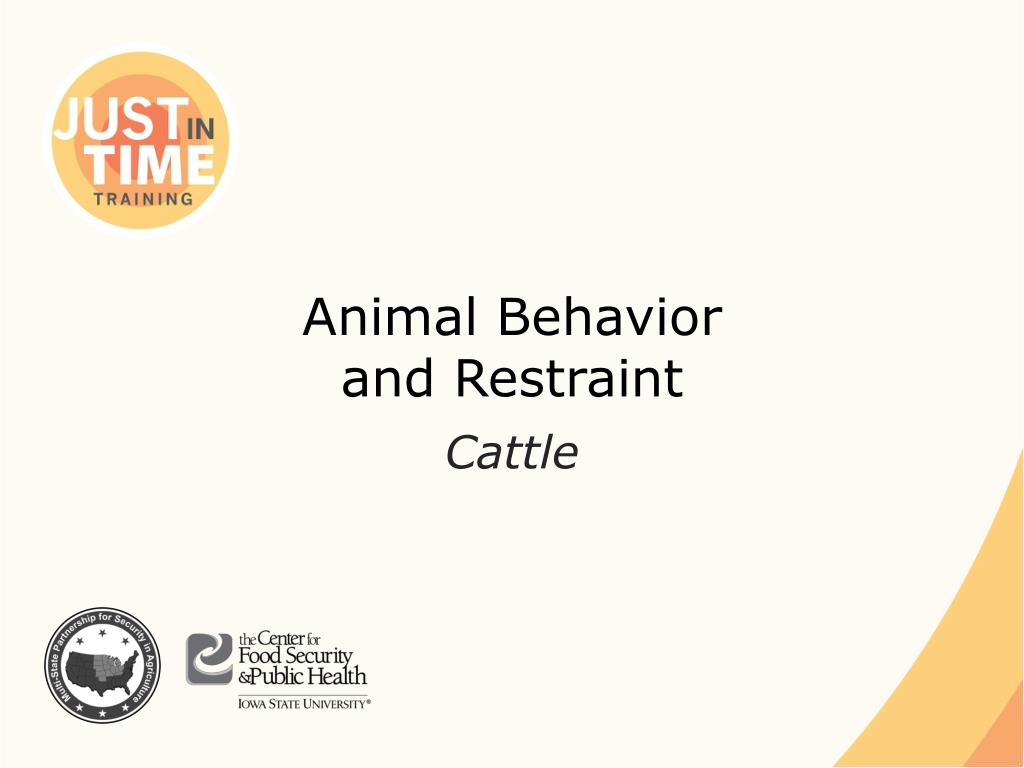 animal behavior and restraint l.
