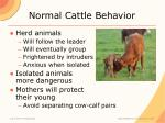 normal cattle behavior