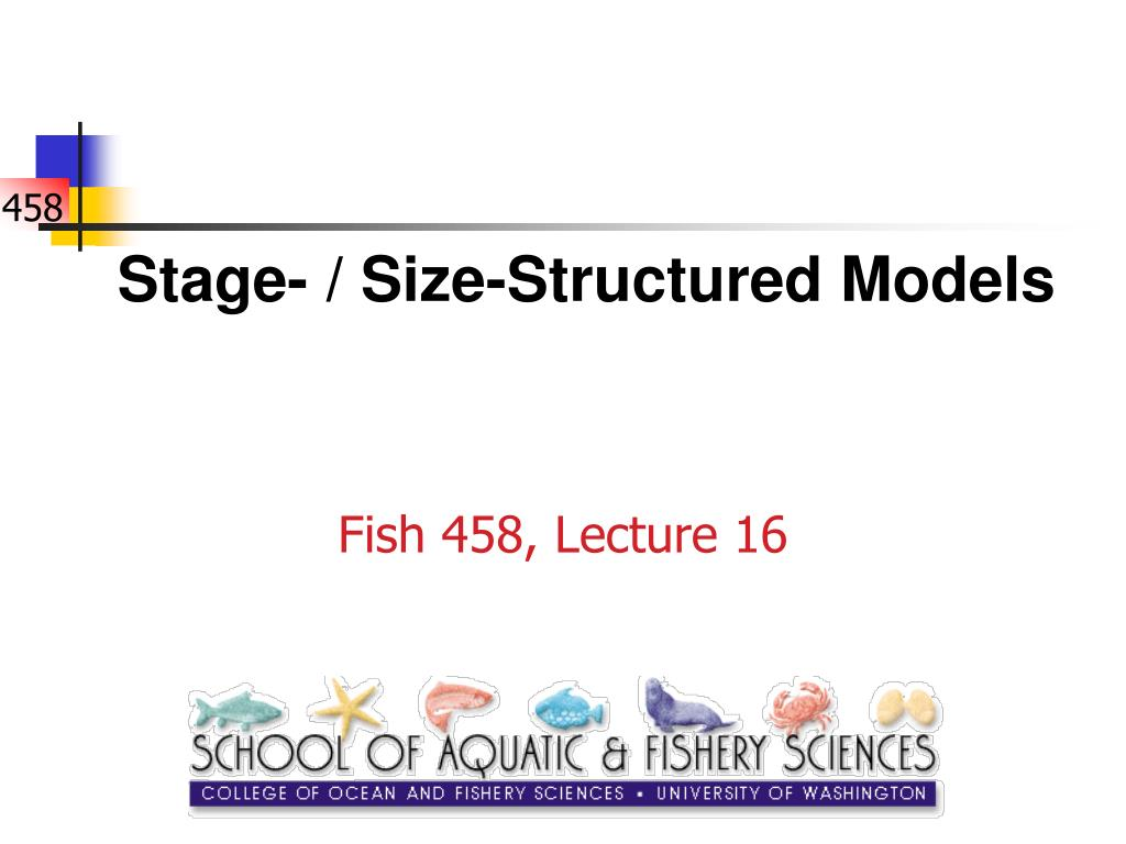 stage size structured models l.