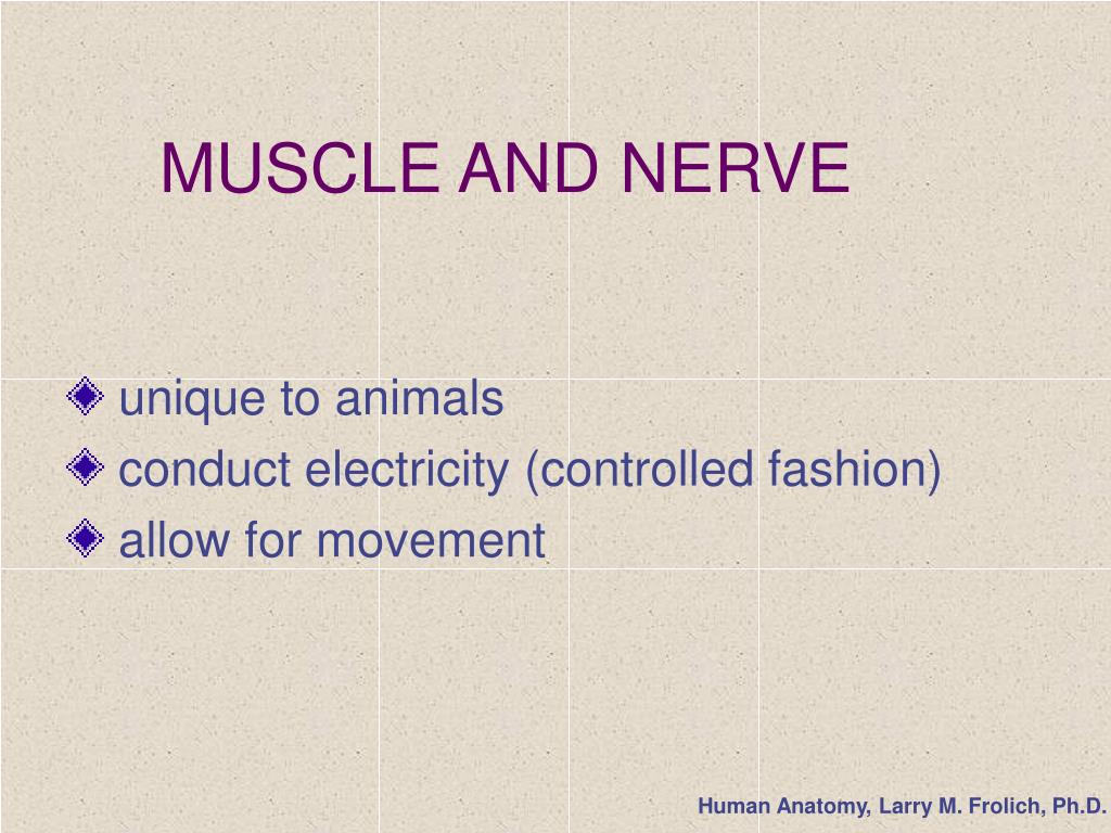 muscle and nerve l.
