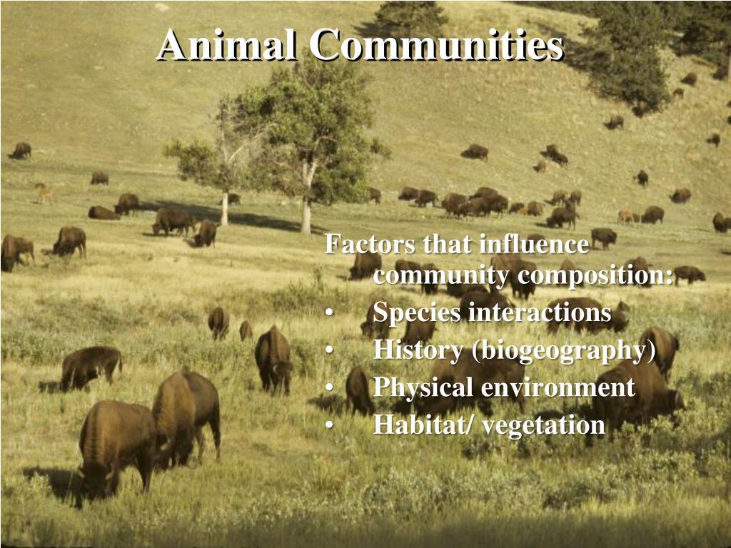 animal communities l.