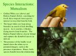species interactions mutualism