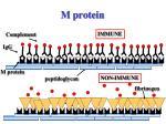 m protein