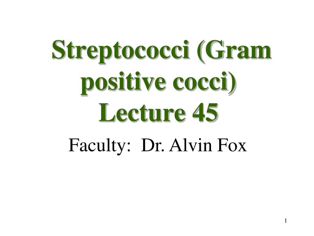 streptococci gram positive cocci lecture 45 l.