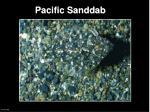 pacific sanddab