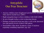 amygdala our fear structure