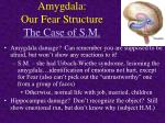 amygdala our fear structure the case of s m