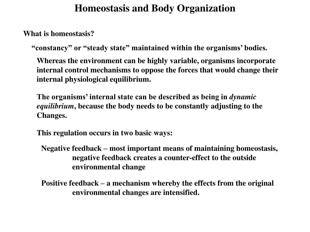 homeostasis and body organization l.