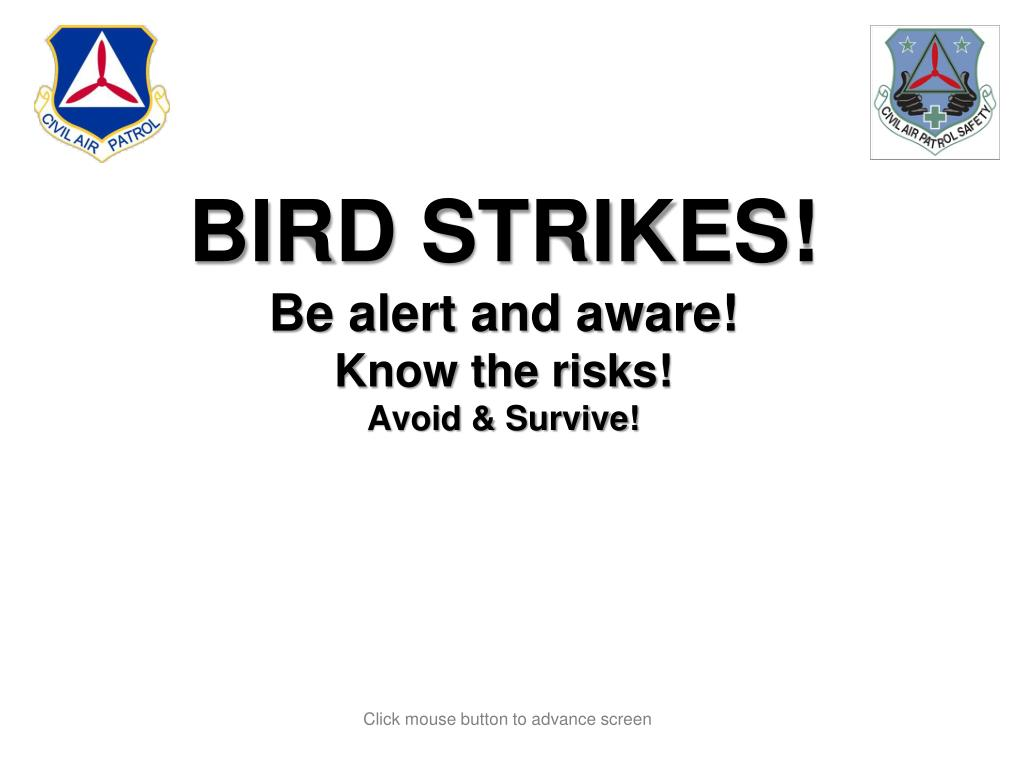 bird strikes be alert and aware know the risks avoid survive l.
