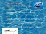 chondrichthyes also known as elasmobranchia