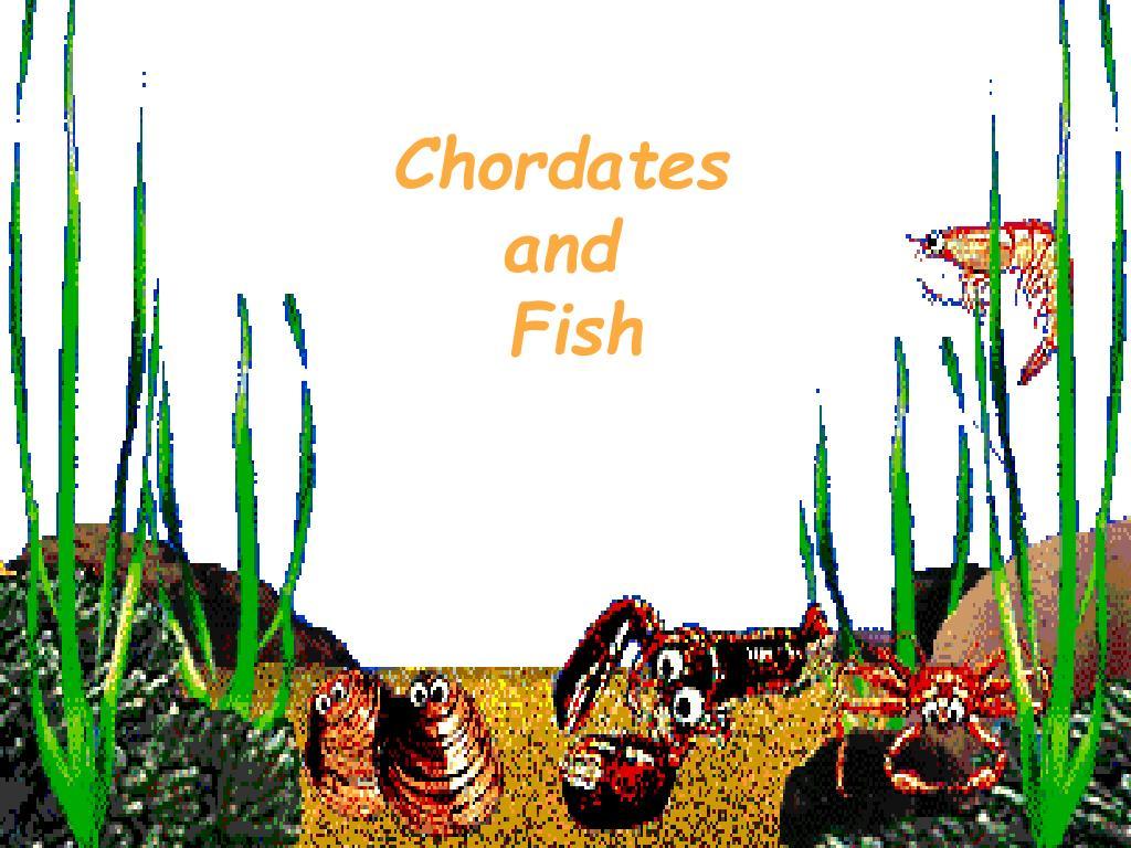 chordates and fish l.
