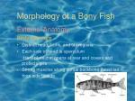 morphology of a bony fish