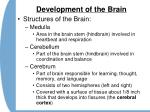 development of the brain25