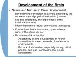 development of the brain30