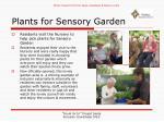 plants for sensory garden