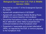 biological opinion from u s fish wildlife service 1994