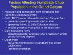 factors affecting humpback chub population in the grand canyon