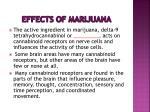 effects of marijuana34