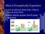 meat is energetically expensive