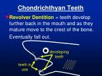 chondrichthyan teeth