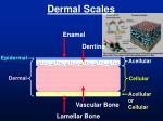 dermal scales