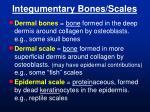 integumentary bones scales
