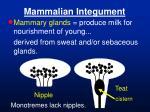 mammalian integument36